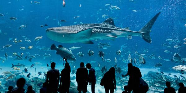 4 superbes aquariums pour des balades sous marines. Black Bedroom Furniture Sets. Home Design Ideas
