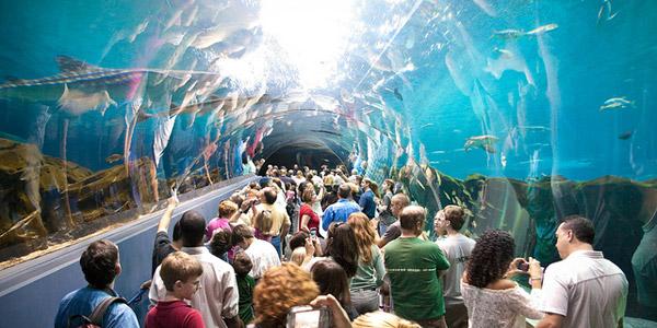 plus gros aquarium du monde