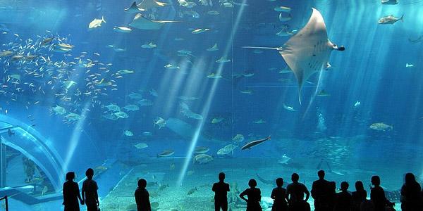 4 superbes aquariums pour des balades sous marines for Aquarium interieur