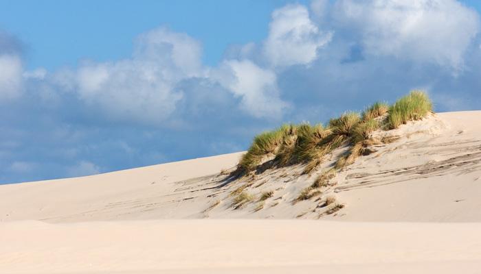Herbes dunes