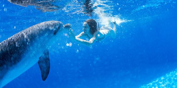 Nager avec des dauphins en france et dans le monde for Nager avec les dauphins nice